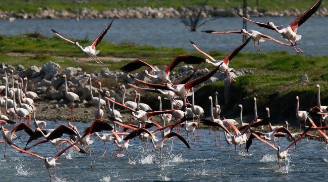 Toplu kuş ölümleri meclis gündeminde