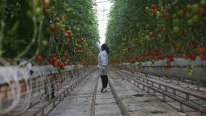 Termal seracılıkta Avrupa'nın en büyüğüz