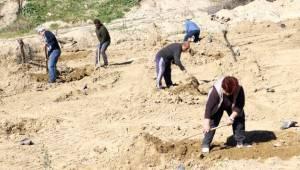 Yanan Arazilere Zeytin ve İncir Fidanı Dikilecek